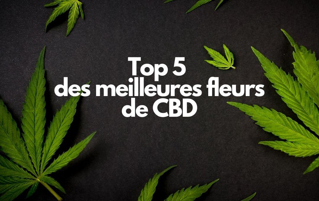 top 5 des meilleures fleurs de CBD.
